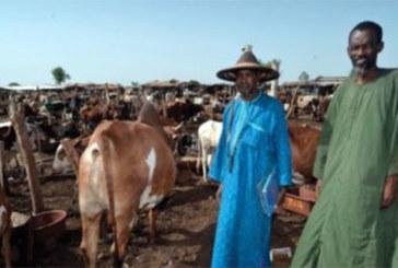 A suivre : rencontre imminente des Peuhls de la sous-région et de la diaspora à Ouagadougou
