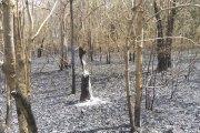 Bobo Dioulasso: plus de 15 ha de forêt ravagés par un incendie à la Guinguette