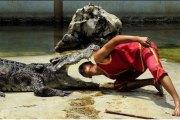 Pour le spectacle, il glisse sa tête dans la gueule d'un crocodile et se fait mordre
