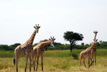 Parc de Waza, le site qui jadis faisait rayonner le Cameroun