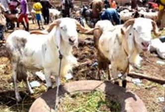Tabaski 2017 : 400 000 FCFA pour le «mouton d'Abraham»