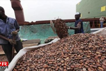 Côte d'Ivoire : Du cacao illégal fourni aux grands noms du chocolat