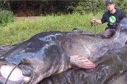 France: Il bat le record du monde du plus long silure jamais pêché