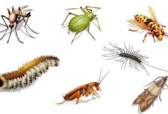 Insectes dans la maison/ Voici des astuces simples pour les tenir loin