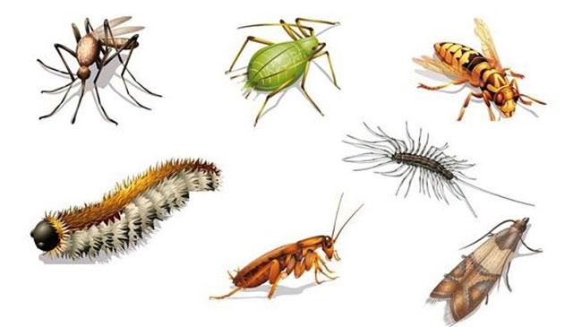 Insectes dans la maison voici des astuces simples pour - Insectes dans la cuisine ...