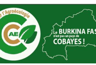 Le Burkina Faso n'est pas un pays de COBAYES : NON aux Moustiques Génétiquement Modifiés