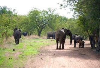 Burkina Faso: Les victimes des dégâts causés par les animaux sauvages appelés à de faire indemniser