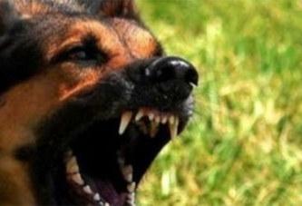 États-Unis: un homme amputé des quatre membres après avoir été léché par un chien