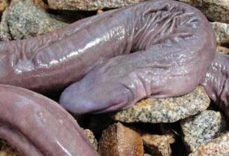 Le « serpent pénis » et autres animaux phalliques