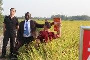 Province de Hubei en Chine:Immersion au cœur d'un bastion agricole