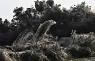 Grèce: Un lac pris dans une toile d'araignée géante