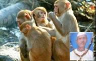 Inde : Un homme de 72 ans lapidé à mort par des singes