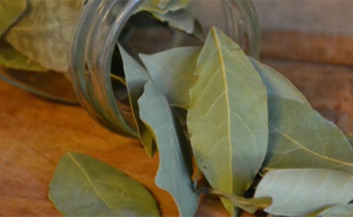 Tout savoir sur les feuilles de laurier : un remède efficace contre le diabète de type 2 !