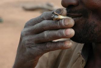 Environ 10% de la population consomment du cannabis au Nigeria