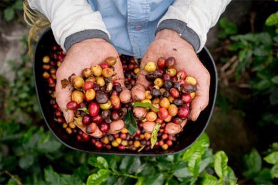 Selon des experts: le café risque de disparaître de la terre