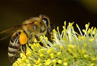 Les abeilles seraient capables de faire des additions et des soustractions, selon une étude
