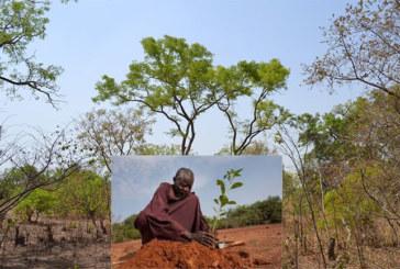 Forêt de Kua: «Je ne suis pas d'accord avec le déclassement. Celui qui connaît la valeur d'une plante ne fait pas ça » (Yacouba Savadogo, Prix Nobel Alternatif 2018)