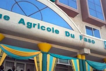 Agriculture : La Banque agricole du Faso (BADF) pose un lapin aux producteurs des Hauts-Bassins