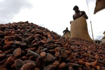 La Côte d'Ivoire et le Ghana suspendent leurs ventes de cacao pour exiger une hausse conséquente du prix