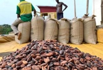 CACAO: Le Ghana et la Côte d'Ivoire font plier les géants du secteur !