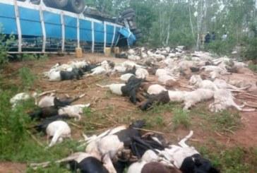 Burkina Faso: 2 pertes en vies humaines et près de 160 béliers tués dans un accident d'un camion transportant du bétail