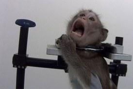 Expérimentation sur des animaux : des images choc filmées dans un laboratoire allemand