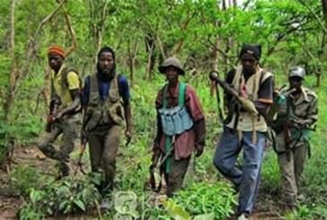 Sénégal: Un village en Casamance attaqué par des individus armés, ce que nous savons