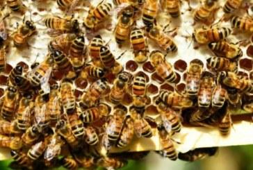 Tanzanie: des abeilles envahissent un stade et sèment la terreur lors d'un match