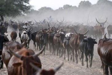 Le Tchad 'rembourse une dette de 100 millions de dollars à l'Angola avec du bétail'
