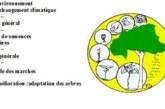 Centre National de Semences Forestières: Résultat Avis à Manifestation d'intérêt -Amélioration de la résilience des écosystèmes agro-forestiers au climat par le biais de la translocation des arbres germplasmes et polinisateurs au Burkina Faso