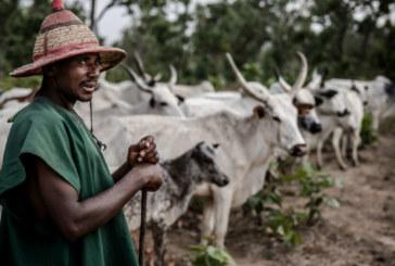 Un nouvel affrontement entre peulhs et agriculteurs fait de victimes à Malanville