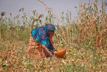 Burkina Faso : 12 provinces connaîtront «une crise alimentaire» entre juin et août (gouvernement)