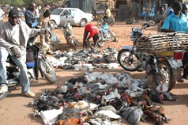 Ouagadougou: La vente d'animaux et de volailles en dehors des ...