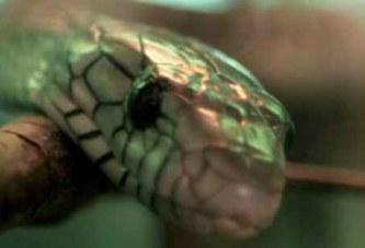Ghana: Il se fait mordre le pénis par un serpent aux toilettes