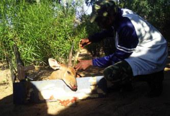 Héritage de Norbert Zongo : Artémis veille sur Safari Sissili