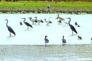 Conservation des zones humides:  Le lac Higa et la mare d'Oursi ménacées
