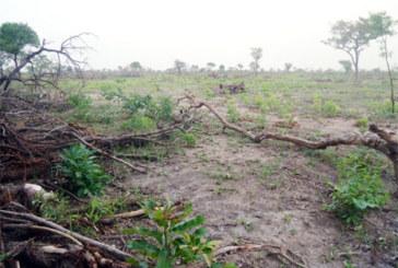 Bradage et spoliation des terres au Centre-Ouest : « Nous sommes assis sur une poudrière »