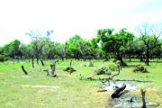 Zone pastorale de Kabonga:Des agriculteurs occupent illégalement l'espace