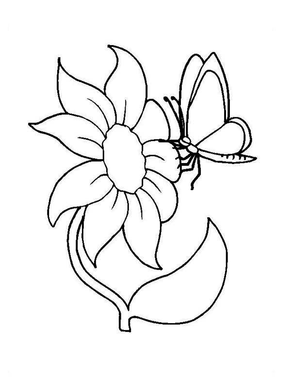 Flower And Butterfly Coloring Page NetArt