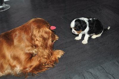Tiffanie vill vara med och busa med Molle