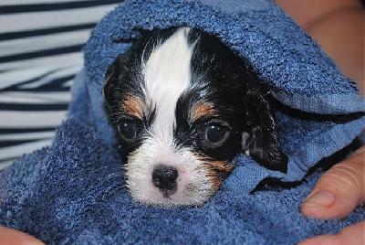 Här har Molle badat