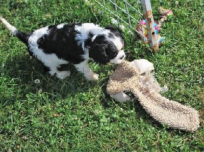Zansa leker med gosdjur