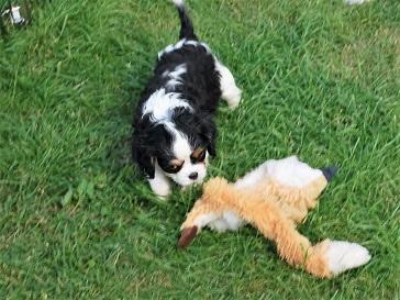 Molle leker med gosdjur