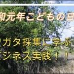 クワガタ採集に学ぶブログアフィリエイトのコツ!(令和元年GW5月5日)