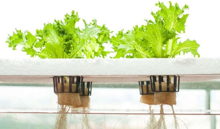 Shaping a New Food System with Hydroponics