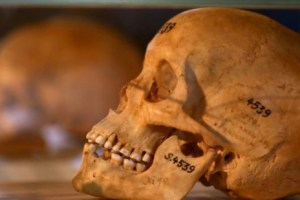 Germany returns skulls of Namibian genocide victims 3