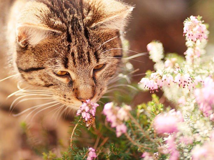cat-1187281_1280_mini