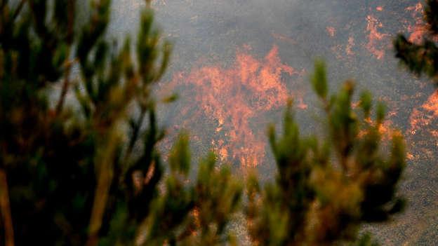 Le nord du Liban ravagé par de grands feux de forêts