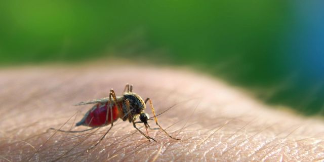 Image result for malaria