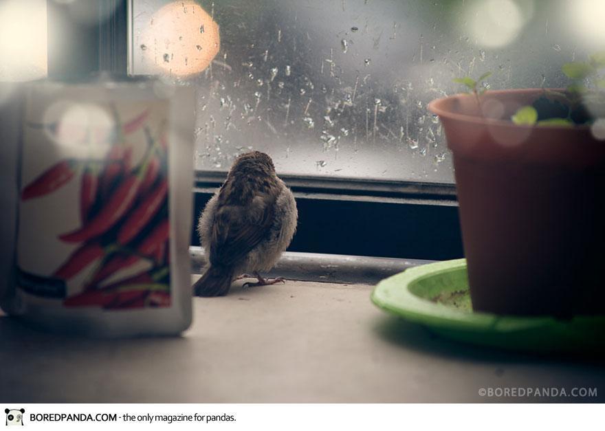 found-blind-baby-sparrow-below-my-balcony-880-2
